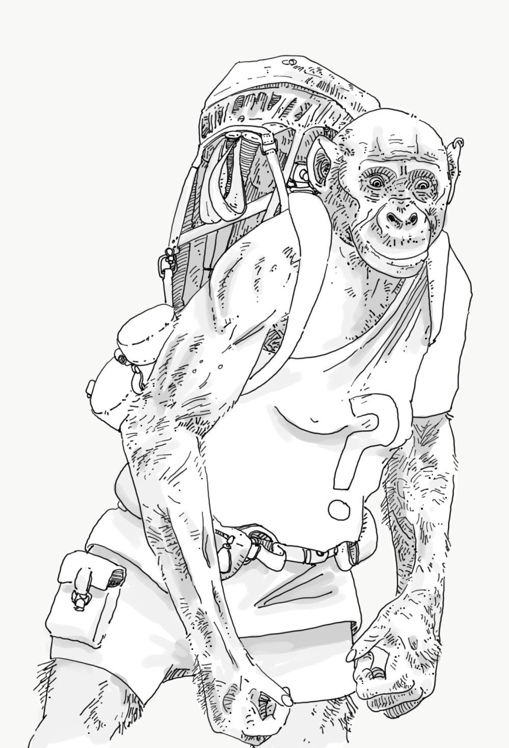 bonobo anthropologist.png